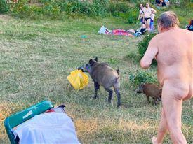 Nøgen mand vildsvin