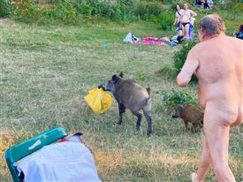 Nøgen mand jagter vildsvin