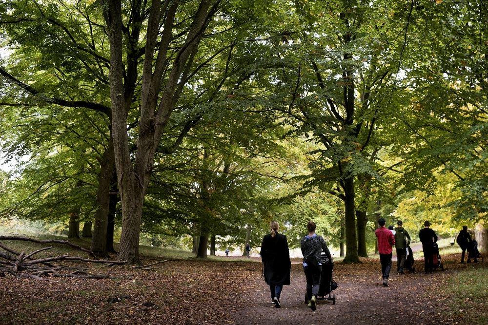 Folk på gåtur i skoven