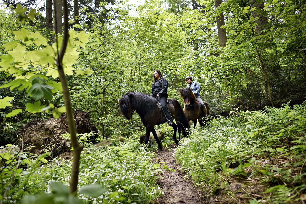 To kvinder på hest i skoven Tisvilde Hegn