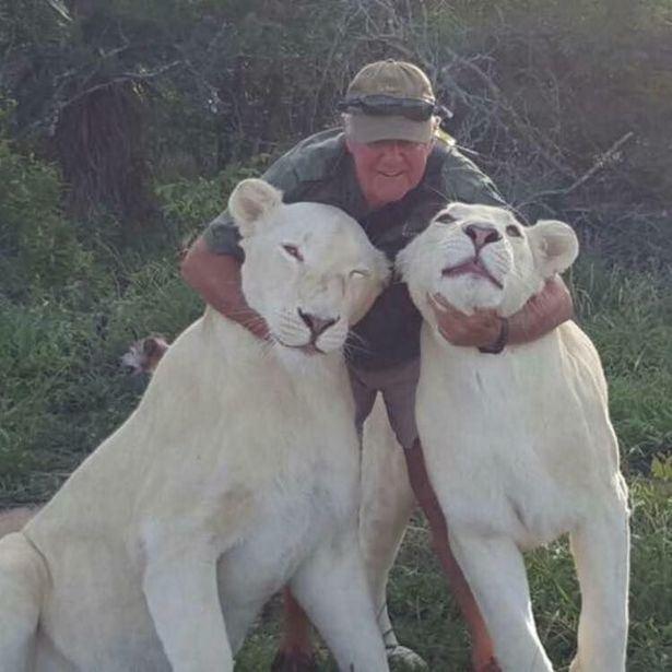 Mand krammer to hvide løver