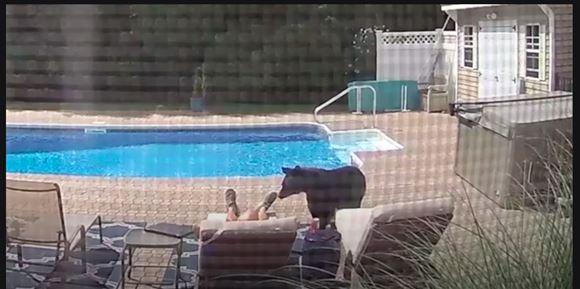 Mand ved pool bliver vækket af bjørn