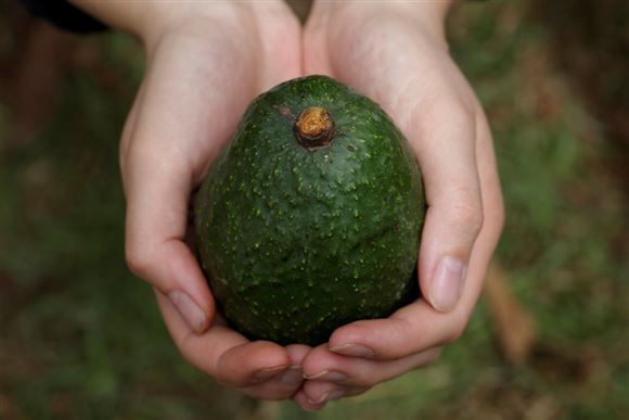En grøn avokado holdes imellem hænderne