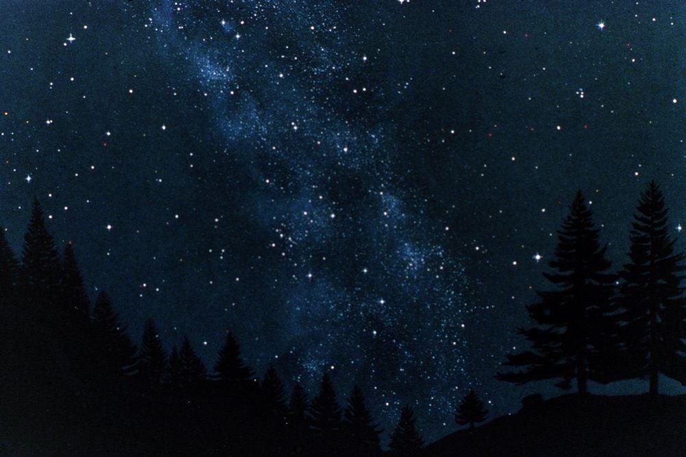 stjernehimmelen med nordlys og grandtræer i baggrunden