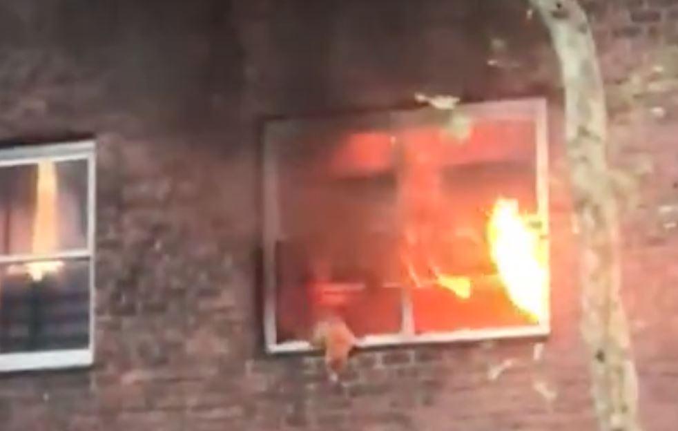En kat hænger i et vindue, mens flammerne ses bag den