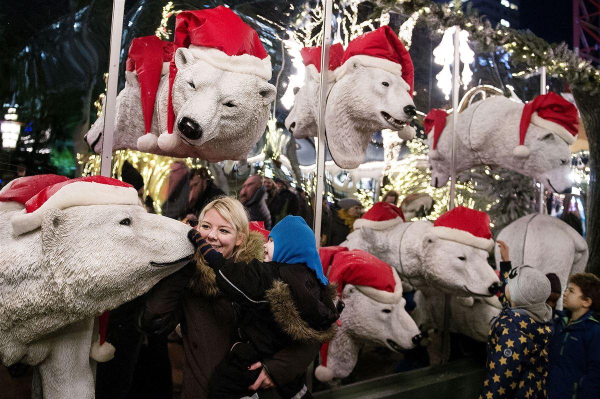 En masse isbjørne-hoveder med nissehuer på.
