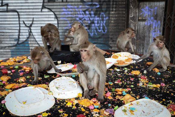 Fire aber kravler rundt på et bord, der flyder med madrester og væltede tallerkener.