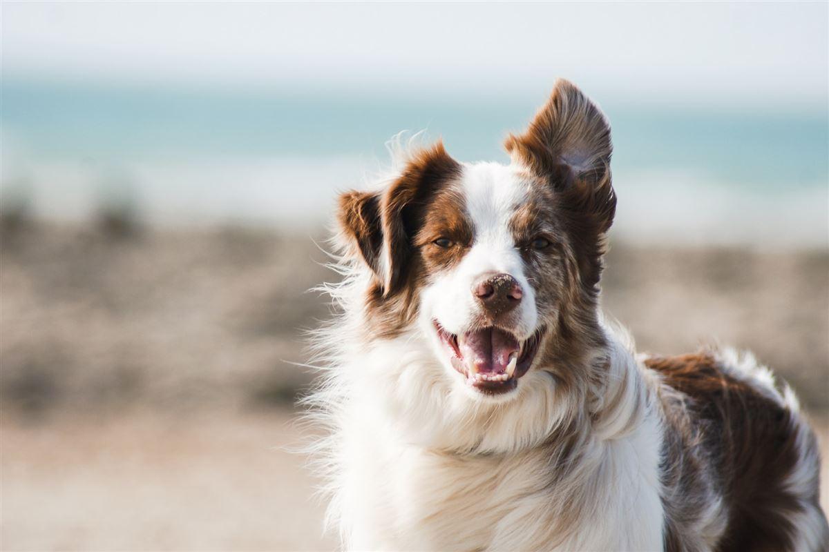 En glad hund ved havet