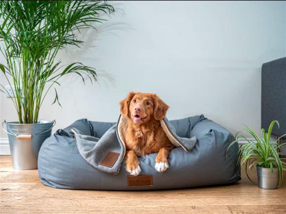 En brun hund i en sækkestols-kurv