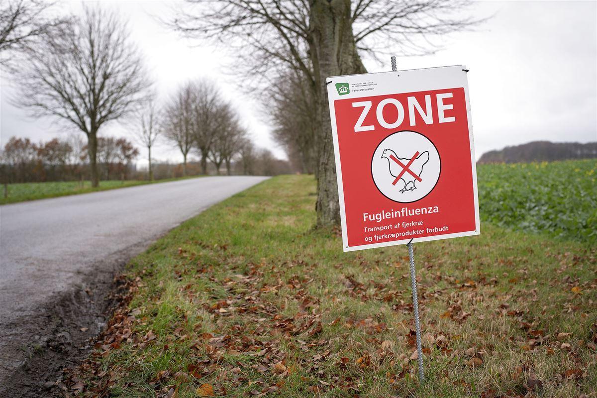 Et billede af et vejskilt med advarsel om fugleinfluenaza