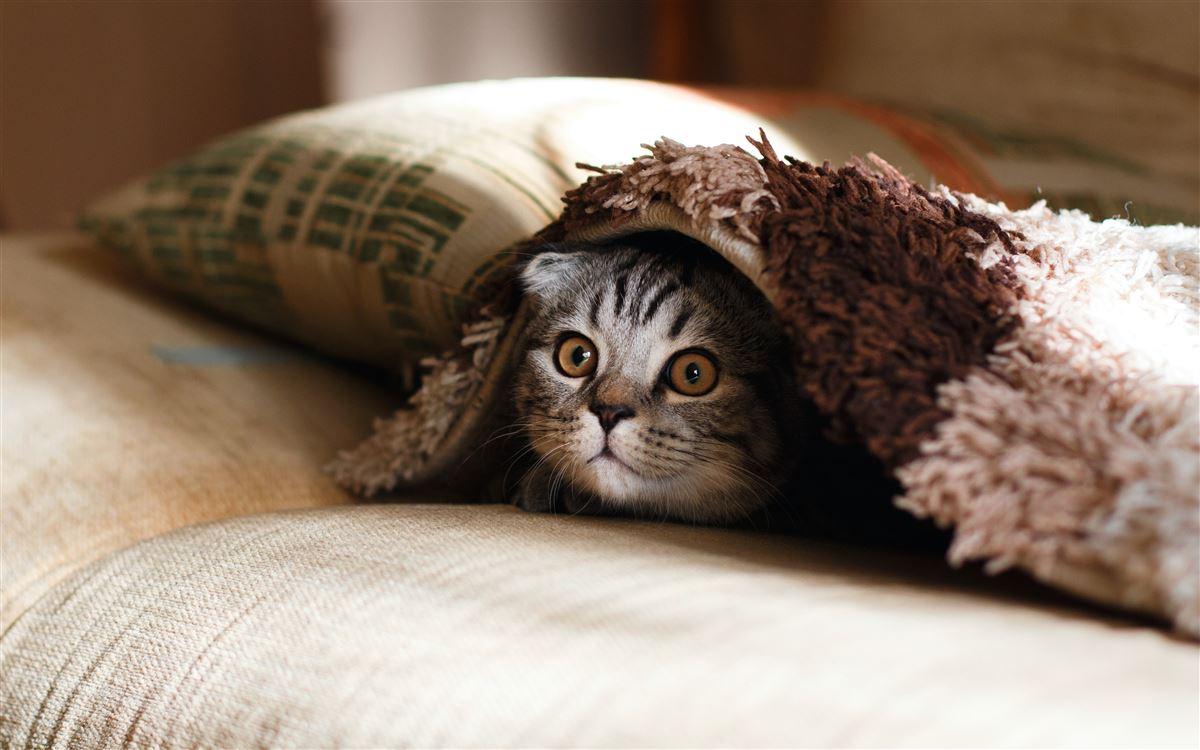 En killing under et tæppe kigger ud