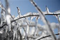 frost på grene på træ