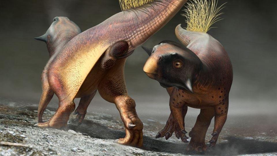 To dinosaurer