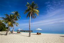 strand med palmer under blå himmel