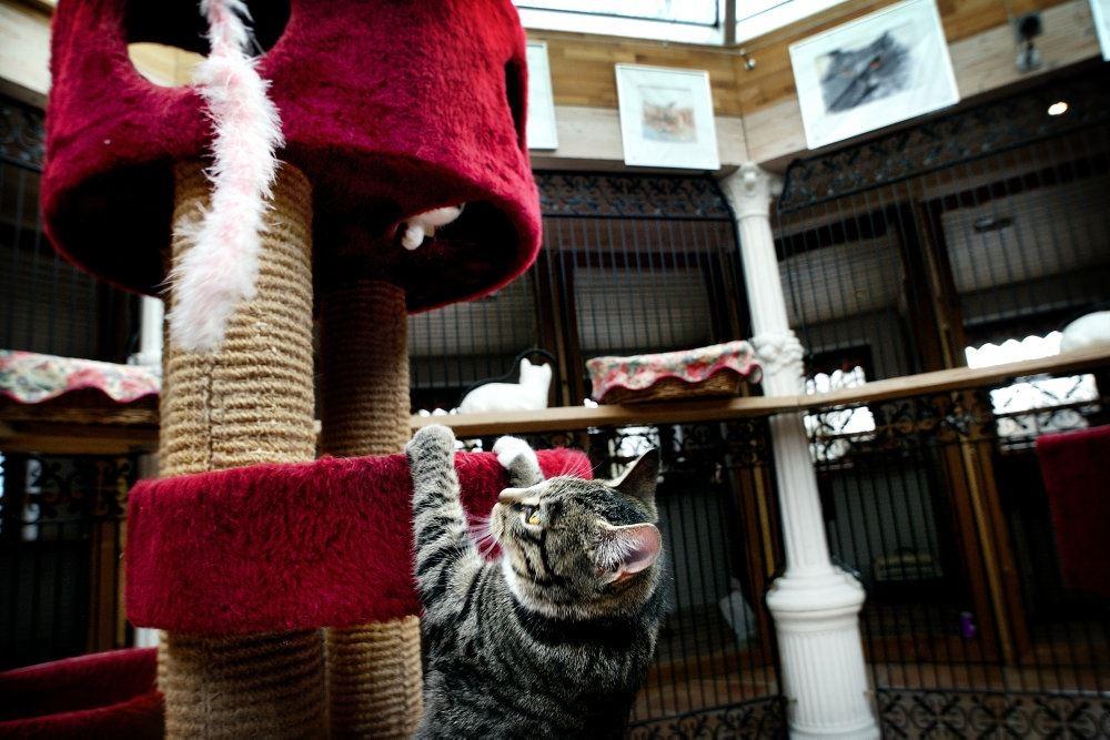 en kat leger på et kradsebræt