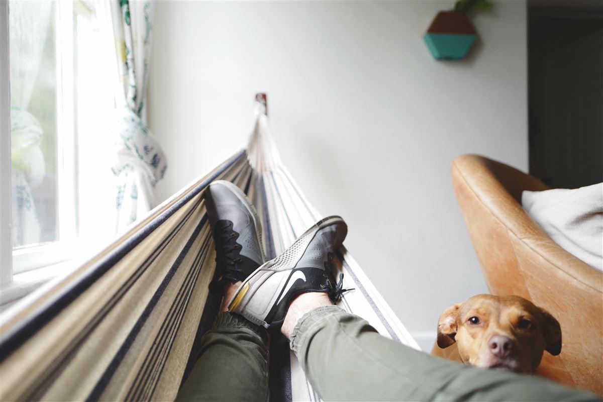 En mand i en hængekøje - en hund kigger på ham