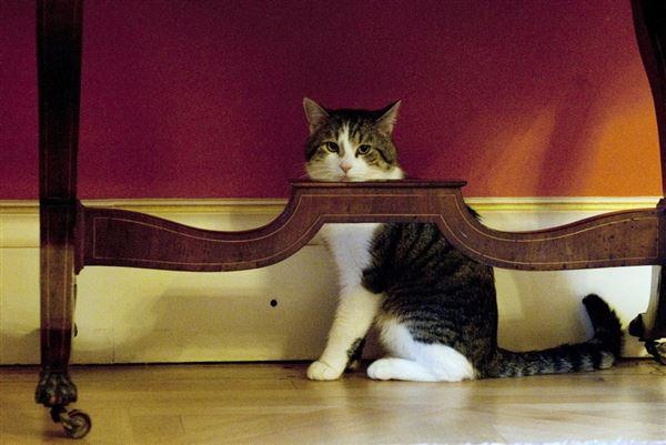 kat sidder under bord