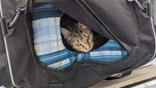 kat kigger ud af taske