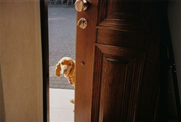 hund kigger ind ad åben dør