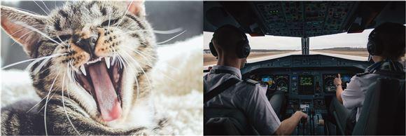 Et cockpit og en kat