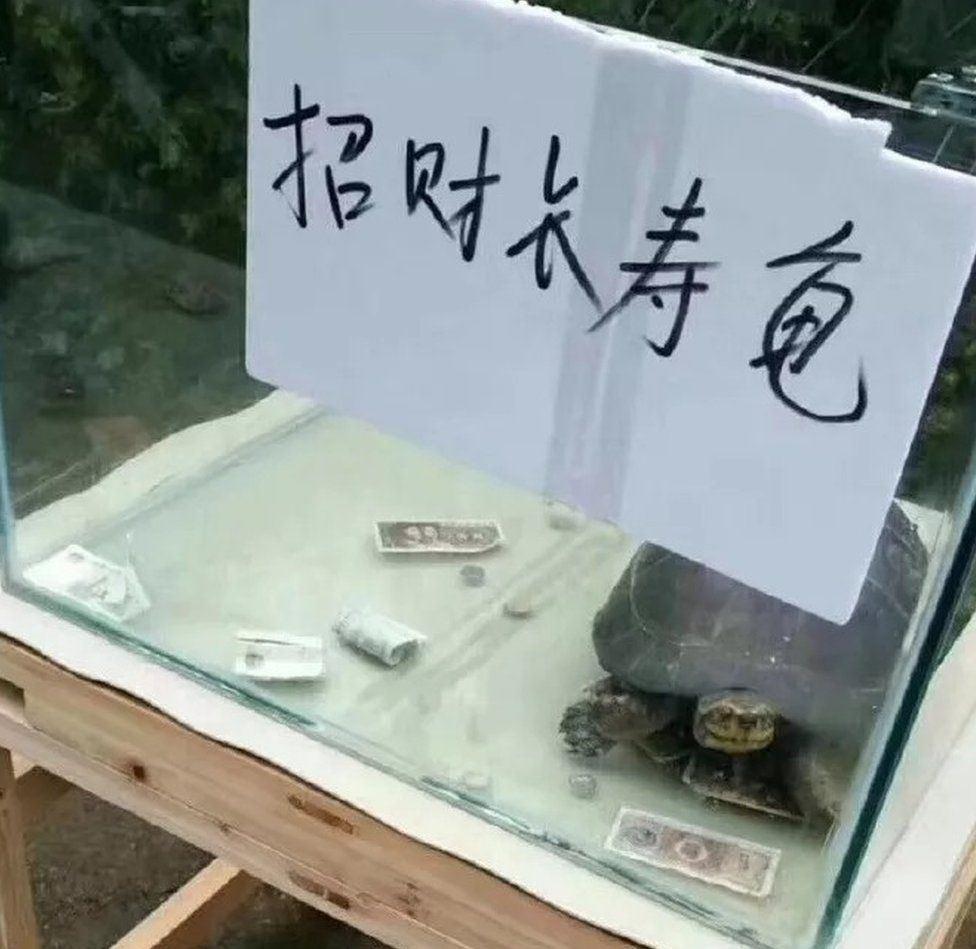 skildpadde i glasbur