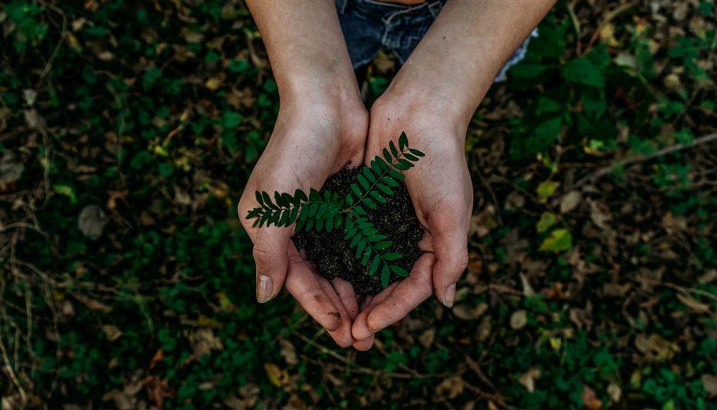 To hænder holder en lille plante