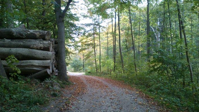 skovsti i marselisborgskoven