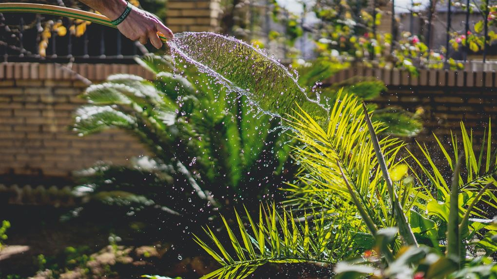 Vandslange og planter