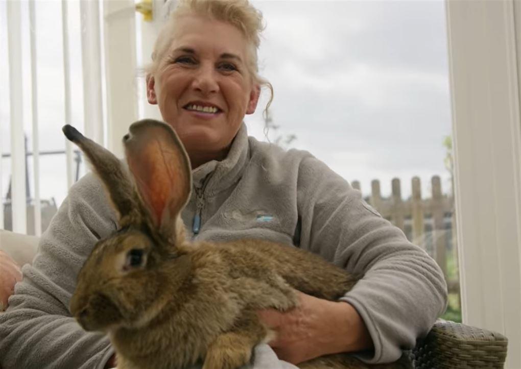 kvinde sidder med stor kanin i skødet