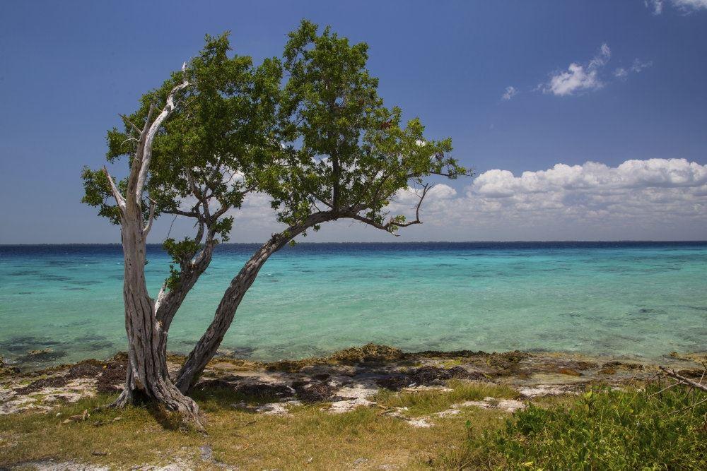 En smuk strand med træer