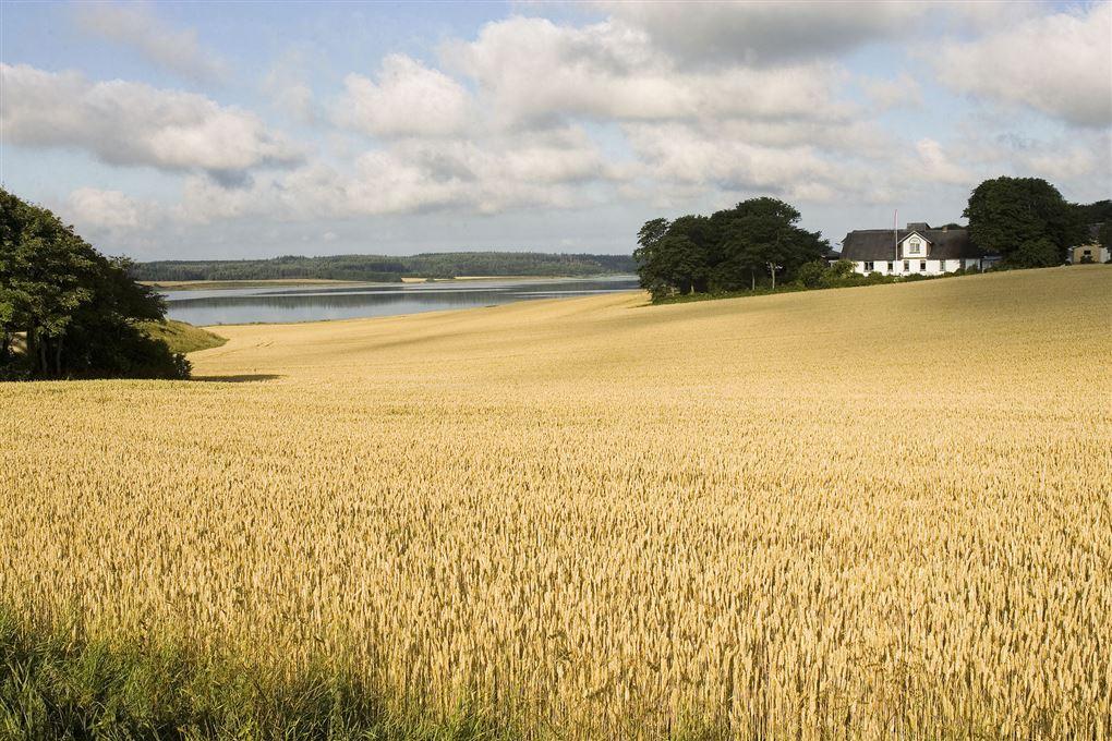 Bølgende kornmarker og lidt vand og en gård i baggrunden