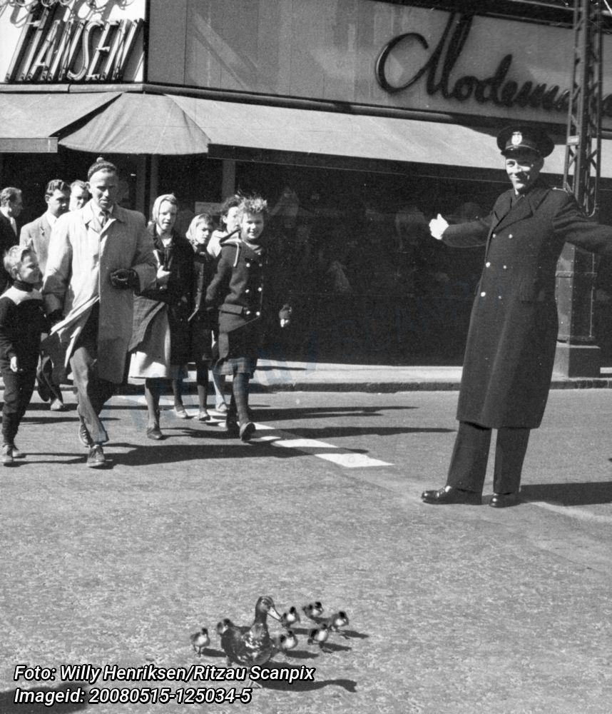 En politibetjent hjælper ænder og ællinger over gaden