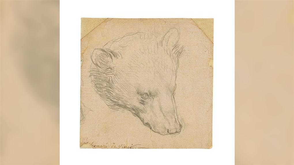 Tegning af Leonardo da Vinci