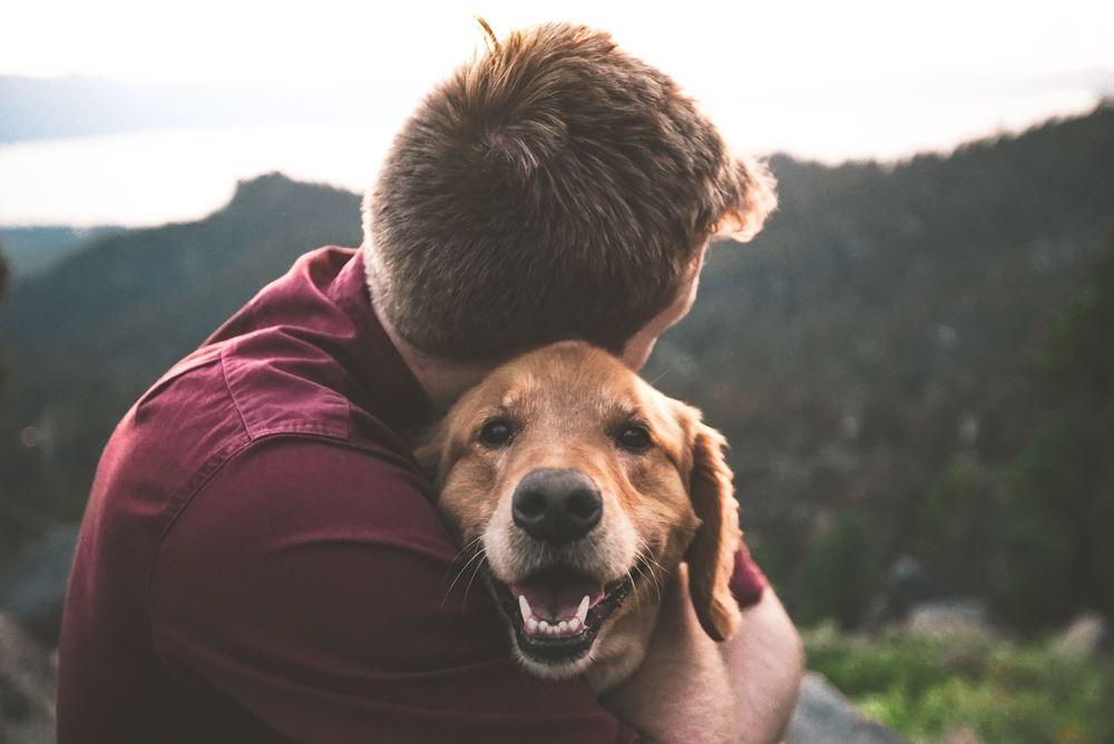 hund sidder med mand