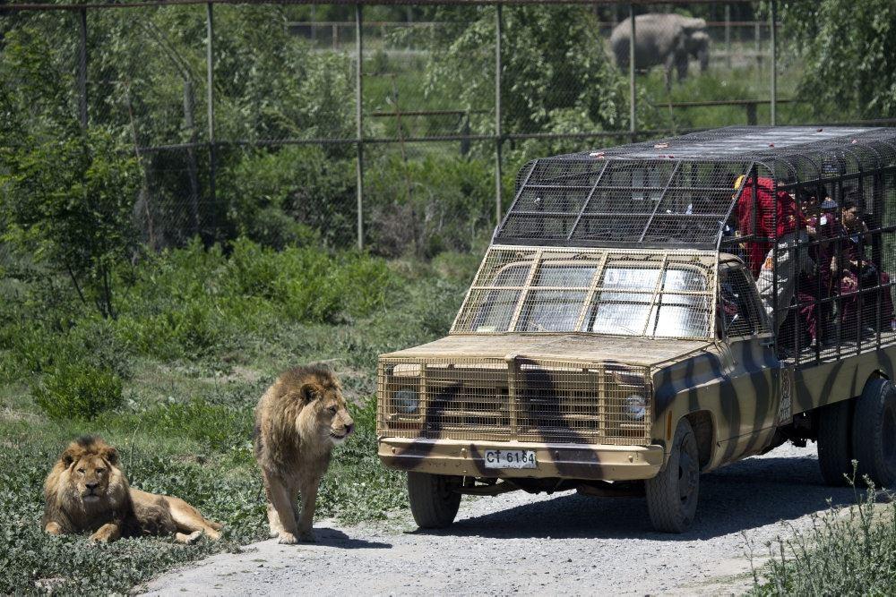 jeep holder i safaripark