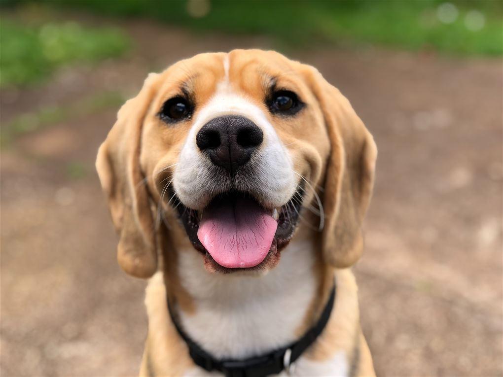 En glad hund