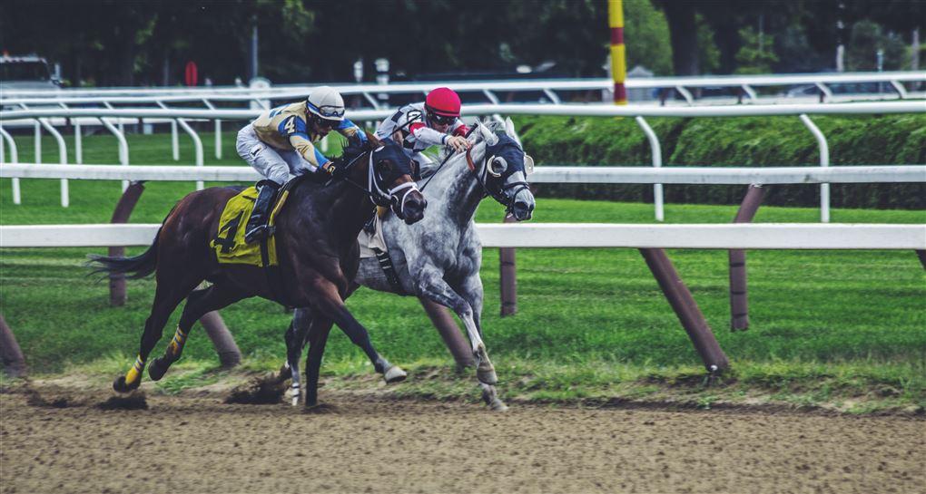 Heste i væddeløb