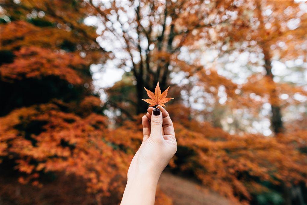 En hånd holder et lille gult blad