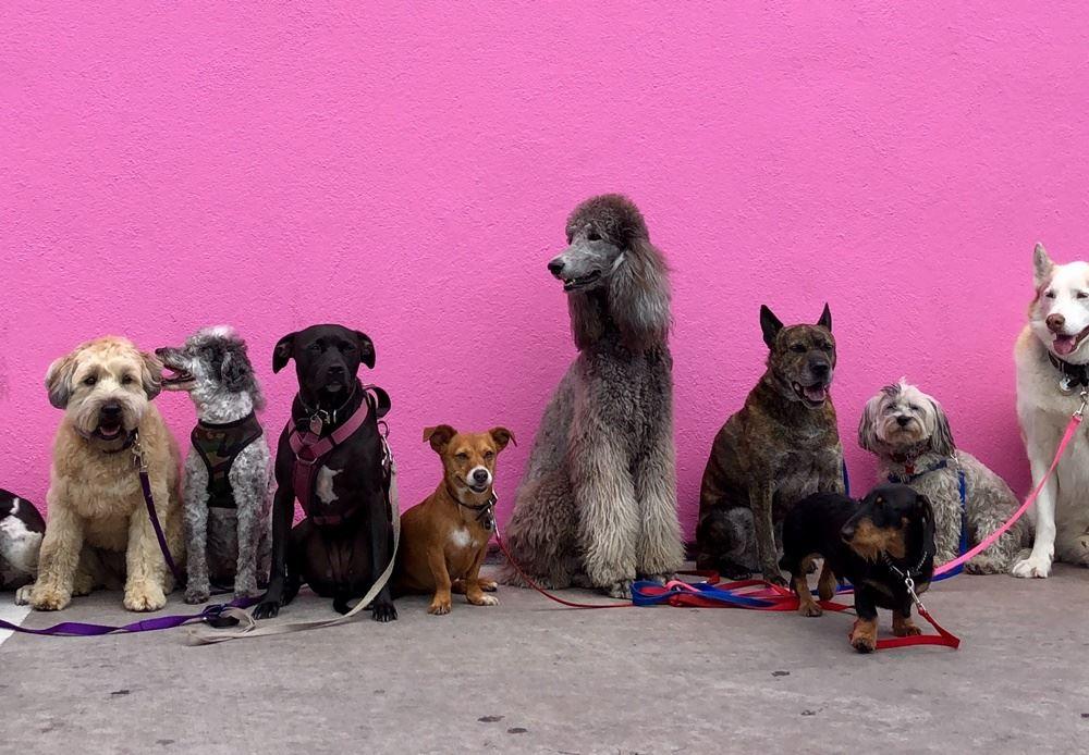 forskellige hunde sidder ved væg