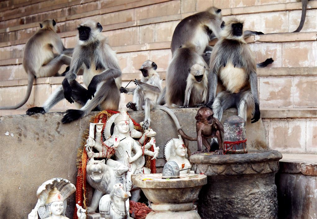 Aber på en trappe i Indien